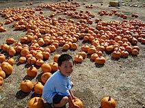 Pumpkin patch halloween